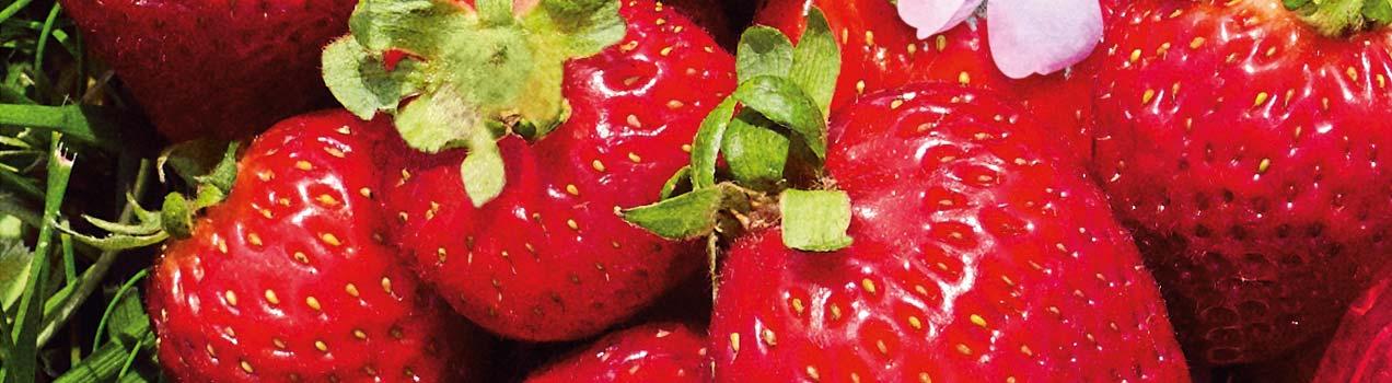 Strawberry Hair Care